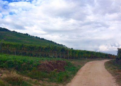Chemin 19