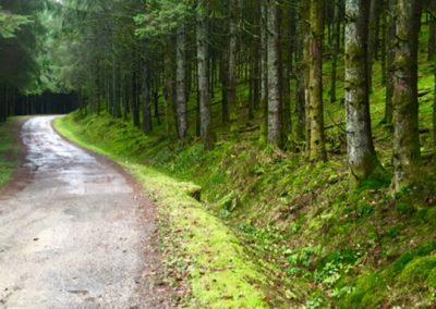 Chemin 24